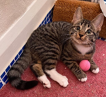 bobby with pink ball.jpg
