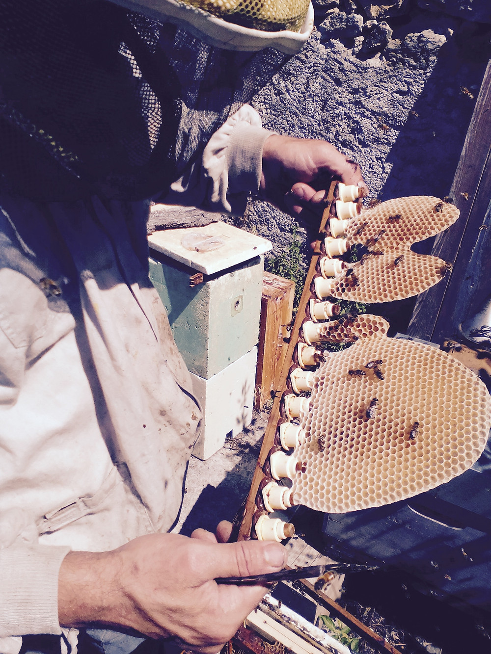 produits de la ruche chez Paul Thirion apiculteur