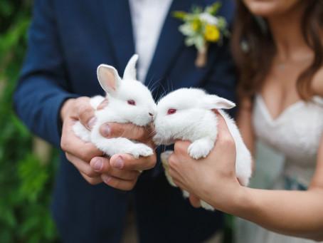 Love bunnies make their vows...
