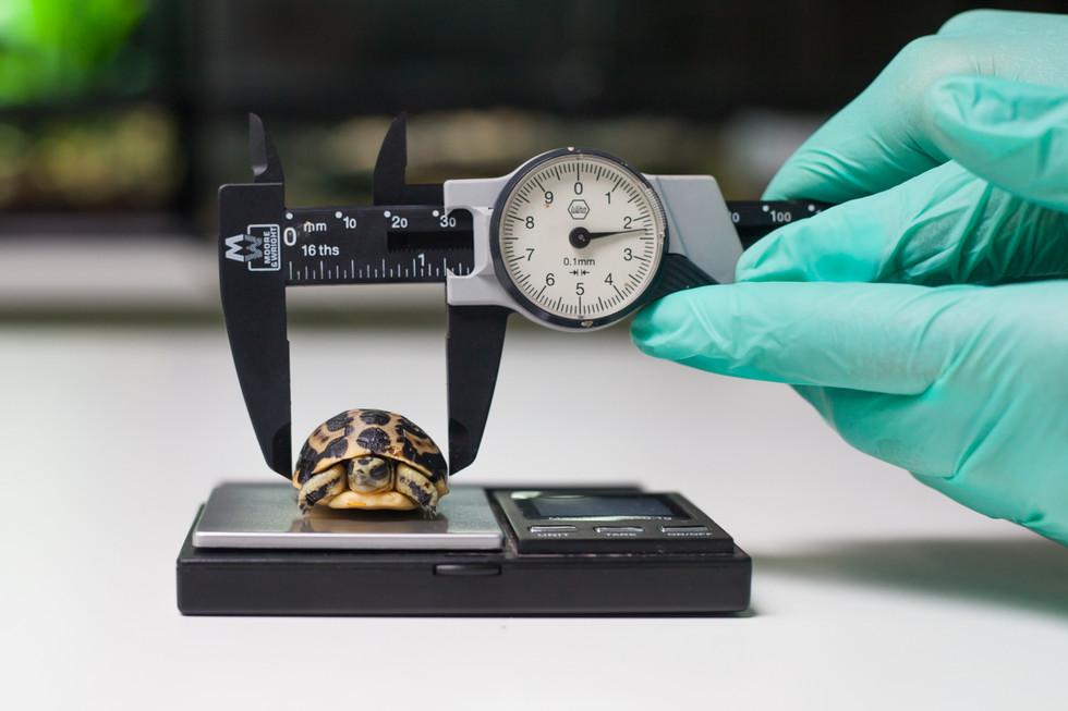 Spider Tortoise LR-3.jpg