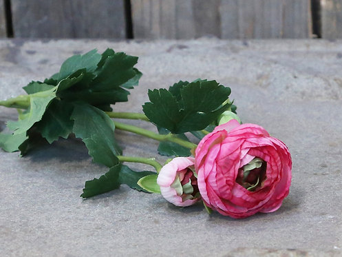 Renoncule rose vif