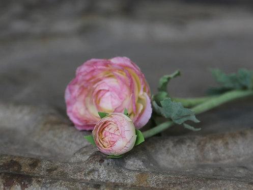 Renoncule rose pale