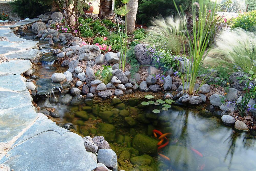 בריכת דגים ונחל
