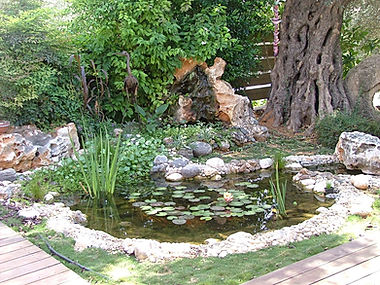 בריכת נוי במראה טבעי בחצר