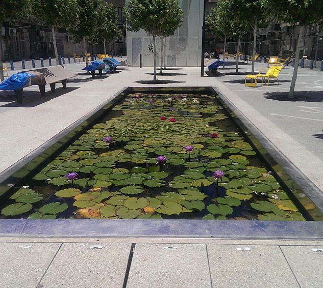 פארק ציבורי עם בריכת נוי
