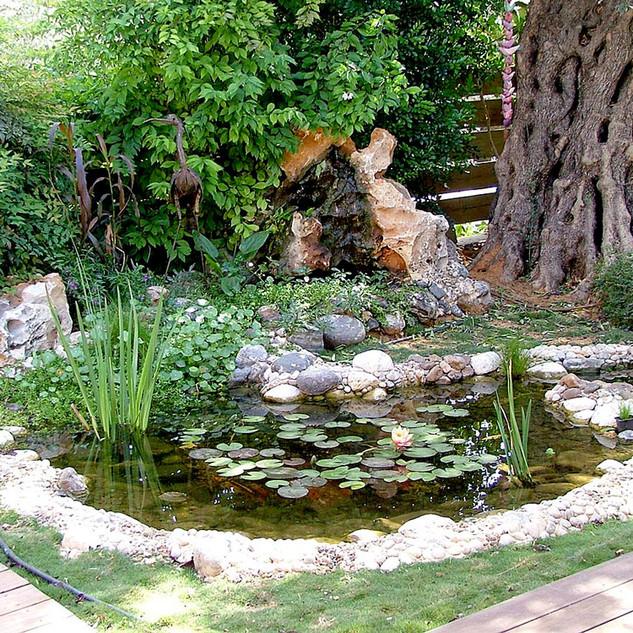 בריכת נוי בגינה פרטית