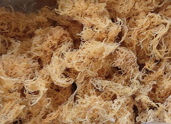 1kg Bulk Caribbean Sea Moss