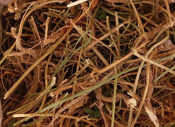 Guinea Hen weed  (Petiveria alliacea)+