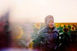 Sunflowers Series