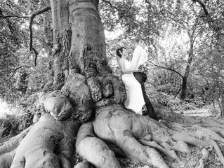 Verwurzelt in der Heimat - der Baum und wir!