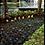 Thumbnail: Apartamento - Jardim Umarizal - 3 Dormitórios