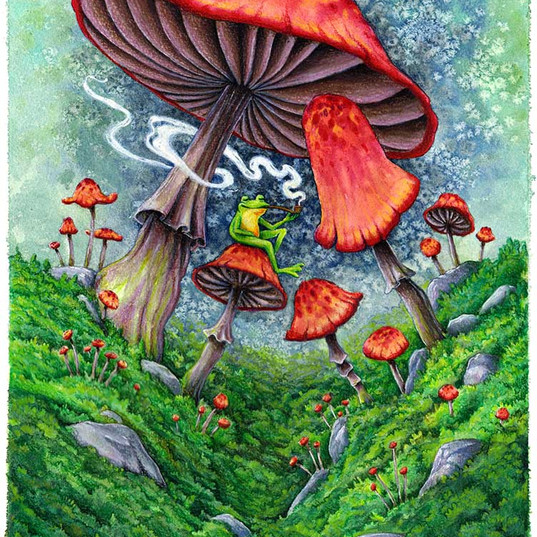 Shrooms and a frog