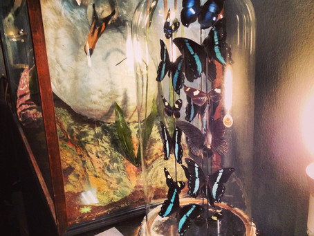 Taxidermy spotted at the Decorative Antiques and Textiles  Fair