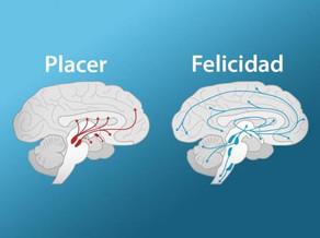 """""""Placer vs Felicidad"""""""