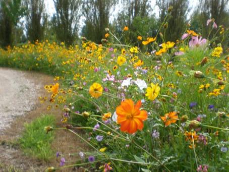 Les bouquets des prés et des jardins