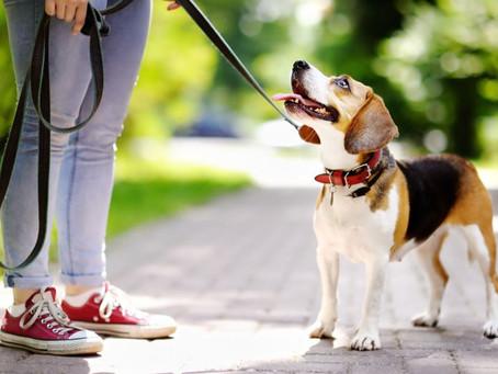 Tips para salir de paseo con tú perro