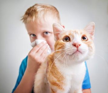 Consejos para reducir los síntomas de la alergia a mascotasConsejos para reducir los síntomas de la