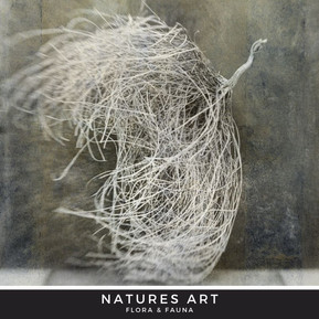 NATURES ART