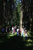 Gruppen Anlass im Wald