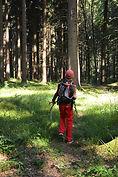 Ferienprogramm Wald