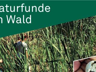 Ferienplausch - Naturfunde im Wald - 15. Oktober
