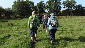 Knepp Rewilding walking safari blog post