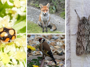 April 2021 Results: Find Wildlife From Home Survey