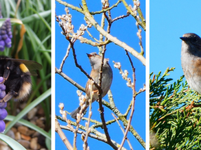 March's Results: Find Wildlife From Home Survey