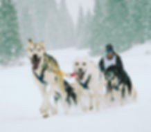 Sled dogs pulling sled