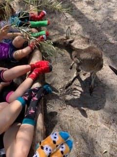 Kangaroo kids.jpg