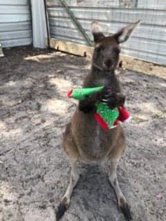 Kangaroo socks.jpg