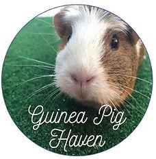 Guinea Pig Haven.JPG