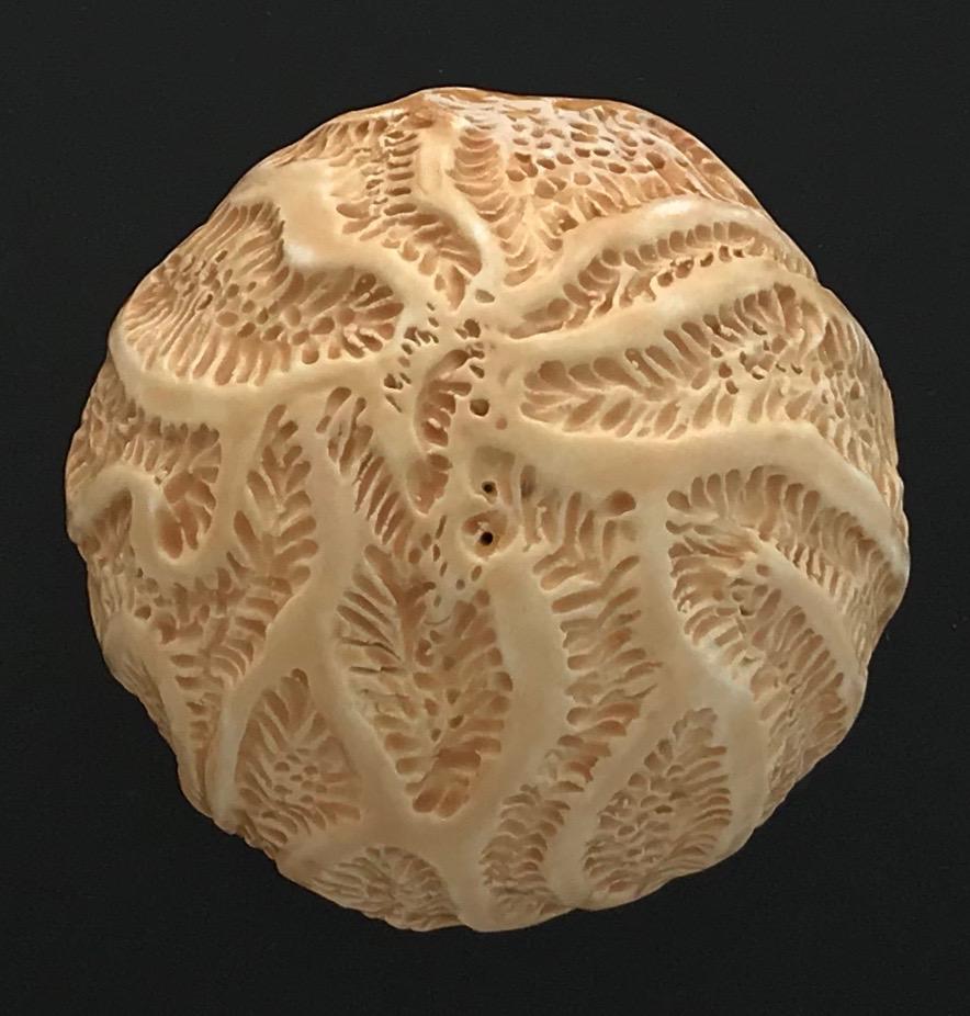 Marigold Coral