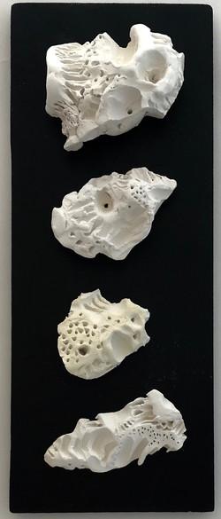 Coral Bursts
