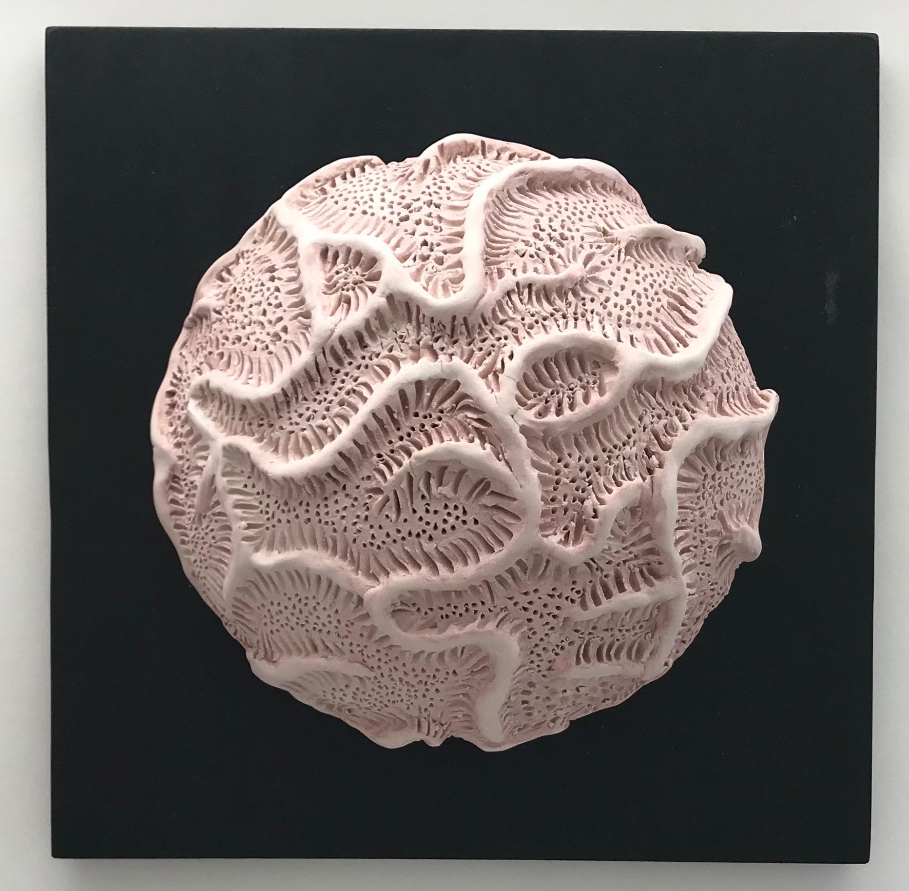 Mauve Brain Coral