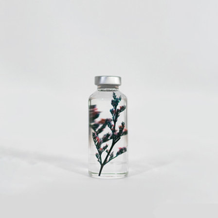 plante en fiole Limonium tetragonum SLOW PHARMACY
