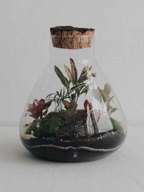 terrarium XL Sumatra ONNO