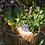 Thumbnail: Sussi l'escargot FABELAB