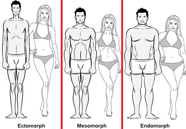 Image of Ectomorph, Mesomorph and Endomprph body types