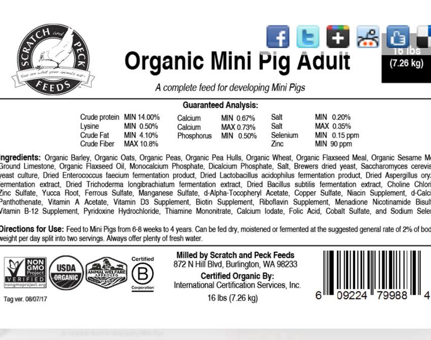 S&P Mini Pig Adult