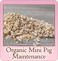 scratch-peck-feeds-organic-mini-pig-maintenance2