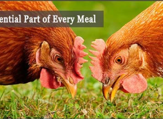 Grit – Because chickens don't have teeth!