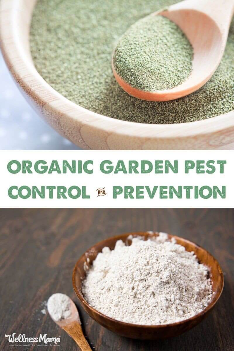 organic-garden-pest-control-prevention 2