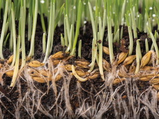 Essential Soil Nutrients: What Plants Need
