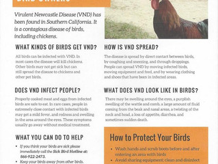 Virulent Newcastle Disease in Southern California ~ What You Need to Know