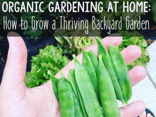 Organic Gardening 101: How to Start Your Own Backyard Garden