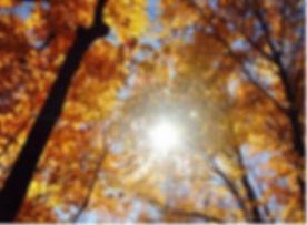 fall.jpeg