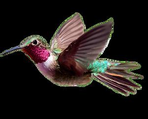 Hummingbird-PNG-Transparent-HD-Photo.png