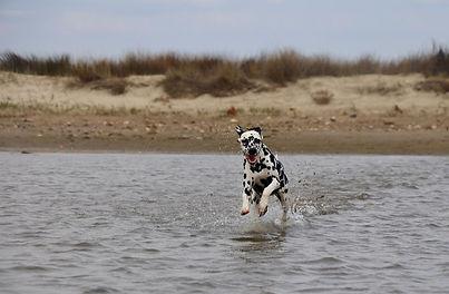 dalmatien-eau