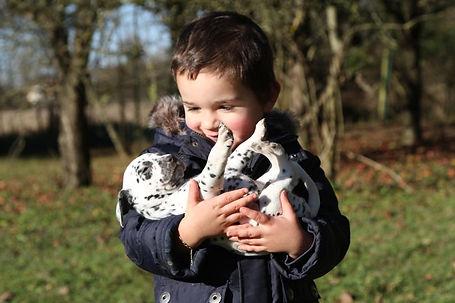 dalmatien et enfant